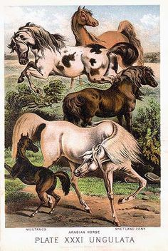 arabian horse vintage prints | Condition: Fine, rich color, very slight evidence of aging in margins ...