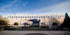 Have some free time? Head over to the Fernbank Museum of Natural History and visit the world's largest dinosaurs! The museum also includes several hands-on exhibitions and a 5-story IMAX theatre you have to experience for yourself.