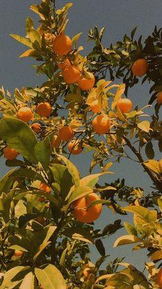Aesthetic Wallpaper Grunge Orange 69 New Ideas Orange Aesthetic, Nature Aesthetic, Flower Aesthetic, Summer Aesthetic, Aesthetic Backgrounds, Aesthetic Iphone Wallpaper, Aesthetic Wallpapers, Iphone Background Wallpaper, Pastel Wallpaper