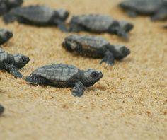 Dalyan Turtle Beach