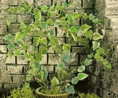 how to: climbing plant (with printable leaves) (In Spanish, with good step-by-step photos)