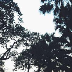 🌴🌴🌴 #hongkong #vegetation #fauna #tree #palms #palmsaddicted #asia
