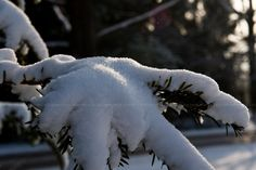 30+ Freezing Examples of HQ #Snowy Winter #Photography