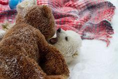 3-4 month old orphaned polar bear cub.  http://www.zooborns.com/zooborns/2013/04/bear-fight.html