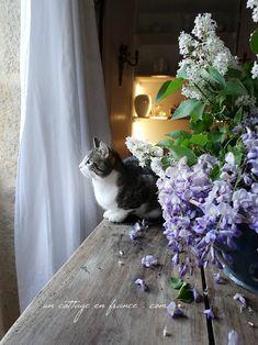 Par la fenêtre (By the window)