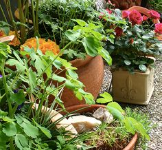 null - Unearth the secrets to small space gardening for flourishing potted plants with this FREE downloadable guide to container gardening! - via @Craftsy
