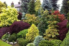 Privacy Landscaping, Hillside Landscaping, Outdoor Landscaping, Front Yard Landscaping, Outdoor Gardens, Landscaping Ideas, Hydrangea Landscaping, Landscaping Contractors, Luxury Landscaping