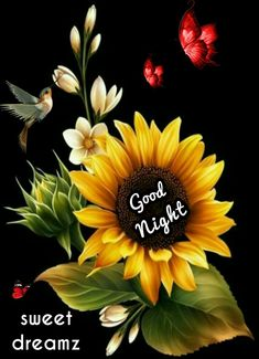 Good Morning Picture, Good Night Image, Morning Pictures, Good Morning Images, Good Night Wishes, Good Night Quotes, Sleep Tight, Morning Light, Love You More