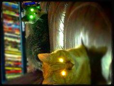 Evil cats.