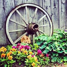 Country Decor with a Wagon Wheel {Prefect idea for my garden bed by the house!}