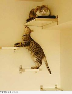 The cat ladder - Maddie needs this so Leo can get up to her bunk bed