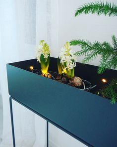 Plantbox Photo Sonja|Kodissa