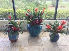 Whether they are indoors or outdoors they are sure to please you and your guests. A bit about Bromeliads:  -Brazil is home to the most species of bromeliads.  -Many types and species, some with a bloom, some without bloom  -Most bromeliads only bloom once in their life.  -Blooms are bright & colorful  -Bromeliads don't have one main flower, they actually produce an array of smaller flowers on spikes