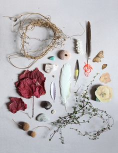 botanical / feathers / laydown photography