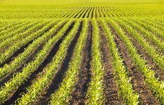 Il Ministero delle Politiche Agricole Alimentari e Forestali rende noto che l'Agea ha approvato le convenzioni che disciplinano i rapporti tecnici ed economici con gli Organismi pagatori e con i...