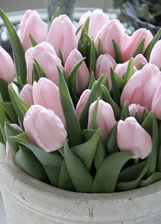 Landscape design, flower garden: Tulips - Pale Pink #bulbs #container_gardening