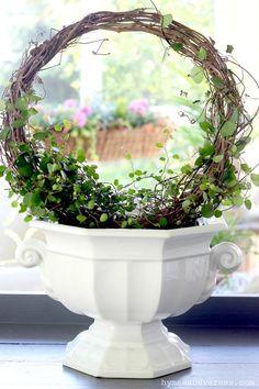 Topiary Decor, Topiary Plants, Topiary Garden, Garden Urns, Succulents Garden, Planting Flowers, Outdoor Topiary, Garden Gates, Planters