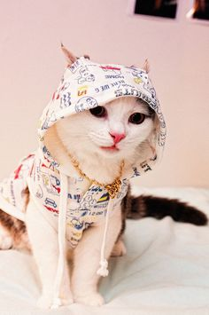 cat in a hoodie via Well-Dressed Animals