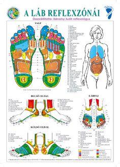 A láb reflexzónái plakát - A3 | Magyar Természetgyógyászok és Életreformerek… Acupressure, Tai Chi, Alternative Medicine, At Home Workouts, Massage, Therapy, Knowledge, Health Fitness, Healing