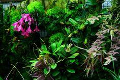 Orchids in Bloom: December 2011