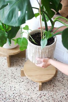 DIY Modern Wood Plant Stands
