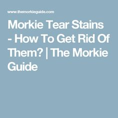 Morkie Tear Stains - How To Get Rid Of Them? | The Morkie Guide