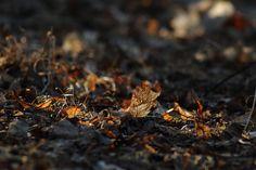 golden leaves by minnamaria on DeviantArt Golden Leaves, Deviantart, Food, Eten, Meals, Diet