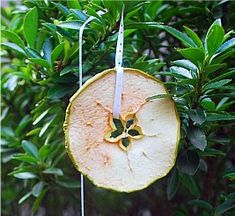 25 Days of Christmas   Dried Apple Ornaments - About A Mom