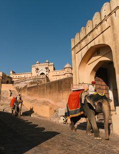 Elephants walking down from Amer Fort, Jaipur.