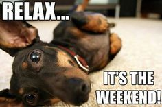doxie says RELAX!