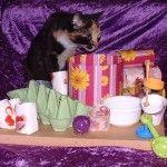 DIY+Cat+Activity+Board