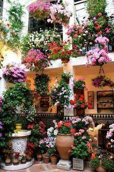 Flores lindas :)
