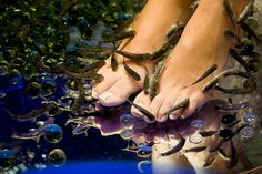 The number one day Spa in Athens, as rated by hundreds of travelers in Tripadvisor.Athens fish spa is an unforgettable experience you can't afford to miss. One Day Spa, Fish Pedicure, Soften Feet, One Fish, Fish Fish, Life Aquatic, Wellness Center, Dead Skin, Santorini