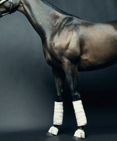 Horse accessories? Beautiful photography by Peter Hapek.  http://wgsn.tumblr.com/post/17204559703/horse-accessories-beautiful-photography-by-peter