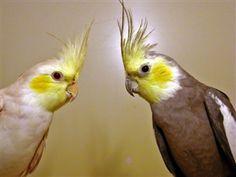 Vogelproblemen  Gezelschapsvoliere onverwarmd