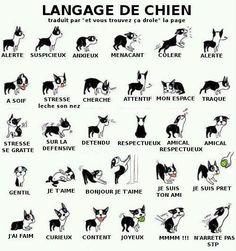 Les différents langages corporels du chien