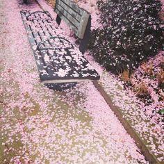 .@penny shima glanz shima glanz Douglas People | Pink petals everywhere #freepeople #spring