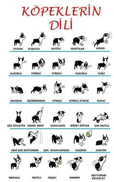Sign Language Alphabet, Dog Language, Mini Bulldog, Funny Animals, Cute Animals, Funny Share, Funny Blogs, Health Words, Cute Funny Dogs