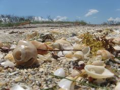 Reminds me of digging for shells on Sanibel Island in Florida on a family trip as a child....good memories!