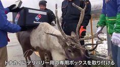 Una pizzería entrena a renos para los repartos a domicilio en Japón La empresa pretende que los animales ayuden a los trabajadores en los meses de invierno  | Actualidad | EL PAÍS