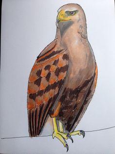 Roofvogel, fineliner en viltstift op papier