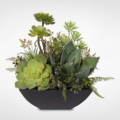Artificial Succulent Arrangement in a