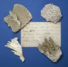 "From 1831 to 1836, Darwin spent his time on the HMS Beagle collecting marine specimens. He studied different types of plankton and barnacles, but went into most detail on coral reefs. He distinguished 3 primary types of reef: atolls, barrier reefs, and fringing reefs. He came up with a theory that ""the overall growth of coral reefs is a balance between the growth of corals upward and the sinking of the sea floor."""