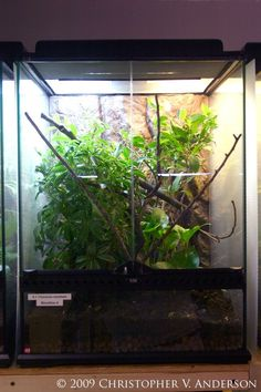 A typical fully planted 18\u201dx18\u201dx24\u201d Exo-Terra Glass Terrarium & Deluxe Pictus Gecko Vivarium | Vivariums and Terrariums ... Pezcame.Com