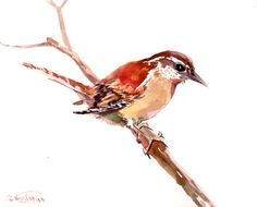 Wren Original watercolor painting 8 X 10 in sepia by ORIGINALONLY, $24.00