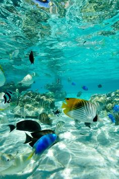This is what I remember most about snorkling in Hawaii only there were far more fish than these.