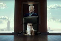 Kevin Spacey bravely faces the next chapter of his career  talking animals!  Kevin Spacey is one of those actors who never makesa bad call  from The Usual Suspects to A Bugs Life to American Beauty toHouse of Cards the guy is a dead ringer.  Thats why I for one am thrilled for the intriguing new family drama Nine Lives in which he plays a cat. Or rather a man. A man turned into a cat. Or rather he provided the voice of a man and later that voice was paired with a CG cat. Who knows! The film…