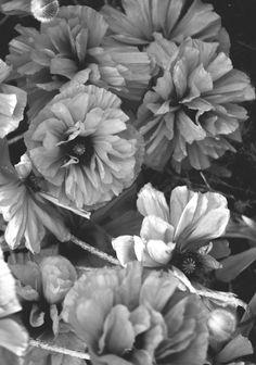hilde-mork-poppy-dance
