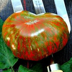 Cheap seeds fruit, Buy Quality seeds fruit vegetables directly from China seeds tomato Suppliers: Super-affordable! Vegetable Seeds Online, Best Tasting Tomatoes, Cherokee Purple, Tomato Garden, Fruit Garden, Vegetable Garden, Garden Plants, Bonsai Seeds, Gardens