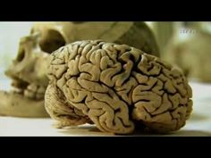 Expedition ins Gehirn I: Gedaechtnis Giganten (Teil 1v5)